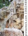 動物 哺乳動物 挖洞 33663489