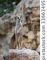 動物 哺乳動物 挖洞 33663495