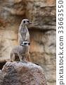 動物 哺乳動物 挖洞 33663550