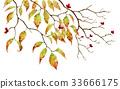 산딸나무, 층층나무, 하나미즈키 33666175