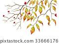 가을의 층층 나무의 가지 33666176