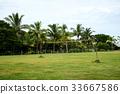 體育場 排球 棕櫚樹 33667586