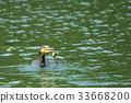 นก,สัตว์,ภาพวาดมือ สัตว์ 33668200