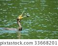 นก,สัตว์,ภาพวาดมือ สัตว์ 33668201