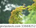 นก,ธรรมชาติ,ทัศนียภาพ 33668252