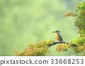 นก,ธรรมชาติ,ทัศนียภาพ 33668253