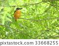 นก,ธรรมชาติ,ทัศนียภาพ 33668255