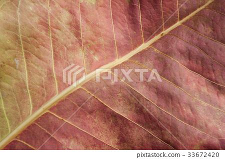 Grunge plant texture 33672420