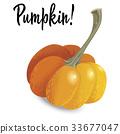 pumpkin, vector, vegetable 33677047
