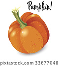 pumpkin, vector, vegetable 33677048