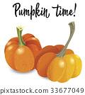 pumpkin, orange, vector 33677049
