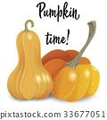 pumpkin, vector, vegetable 33677051