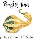 pumpkin, vector, vegetable 33677064