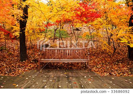 단풍, 가을, 의자 33686092