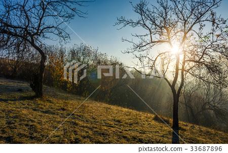 apple orchard on hillside at autumn sunrise 33687896