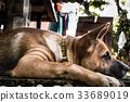 Little dog 33689019