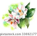 花朵 花 花卉 33692177