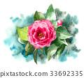 山茶花 日本山茶 花朵 33692335