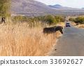 Zebra cross road from Pilanesberg National Park 33692627