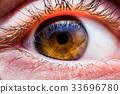 Brown human eye 33696780