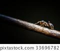 Ant macro photography 33696782