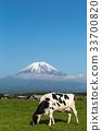 放牧 奶牛 牲口 33700820