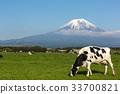 放牧 奶牛 牲口 33700821