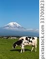 放牧 奶牛 牲口 33700823