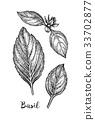 罗勒属植物 罗勒 背景 33702877