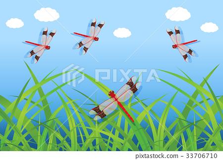 Dragonfly 33706710