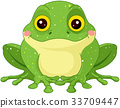 Green Toad 33709447