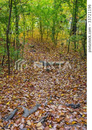 낙엽,종로구,서울 33721196