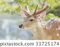 꽃사슴 33725174