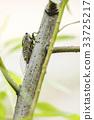 곤충, 나무, 매미 33725217