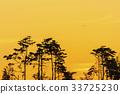 노을, 소나무, 실루엣 33725230