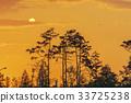 노을, 소나무, 실루엣 33725238