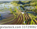 Aerial view of Bali Rice Terraces. 33729082