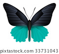 Beautiful butterfly isolated on a white background 33731043