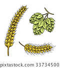 Barley and wheat, malt and hops. Beer of 33734500