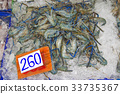 Many live freshwater prawns In the ice Price tag 33735367