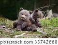 หมี,สัตว์,สัตว์ต่างๆ 33742668