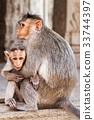 Monkey family 33744397