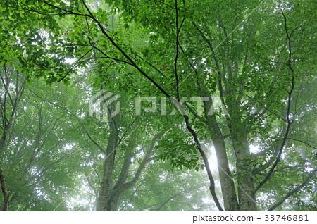 녹색 너도밤 나무 숲 치유의 숲 33746881