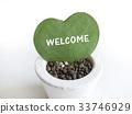 心 植物 植物学 33746929