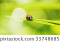 1, 곤충, 무당벌레 33748685
