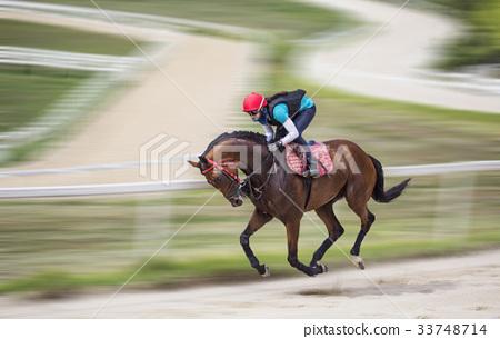 Horse riding, raw stallion ranch, raw sugar, Goyang city, Gyeonggi-do 33748714