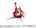 Chihuahua is wearing devil suit. 33749625