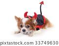 Devil chiwawa 5 33749630