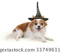 Little dog with black witch hat. 33749631
