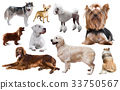 different dog breeds 33750567